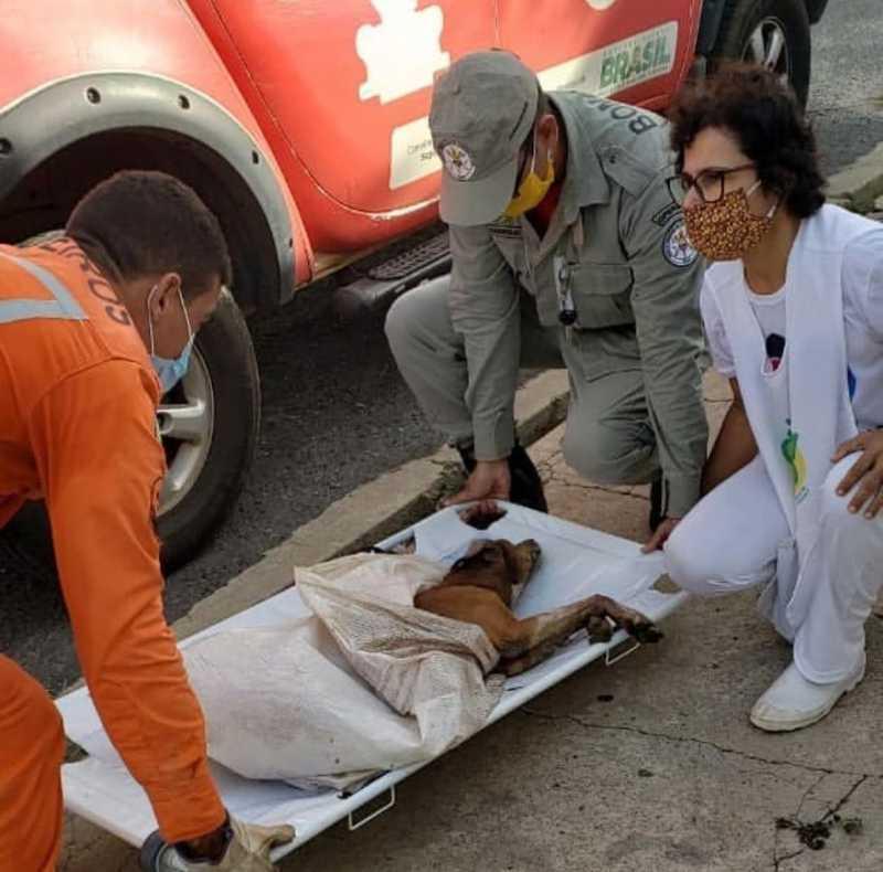 Cão foi achado preso entre dois muros, em Teresina, e está bastante debilitado. — Foto: Divulgação/Corpo de Bombeiros