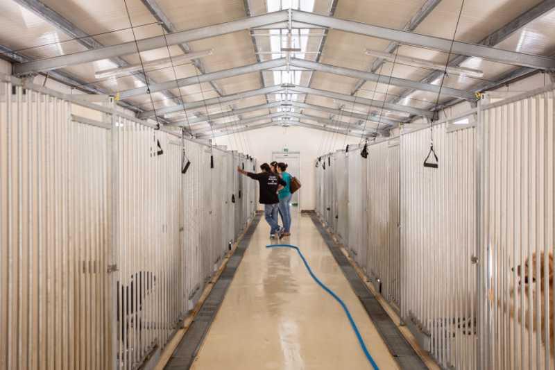 Canil Municipal reabre com boxes para animais de doentes Covid-19, em Santo Tirso, Portugal