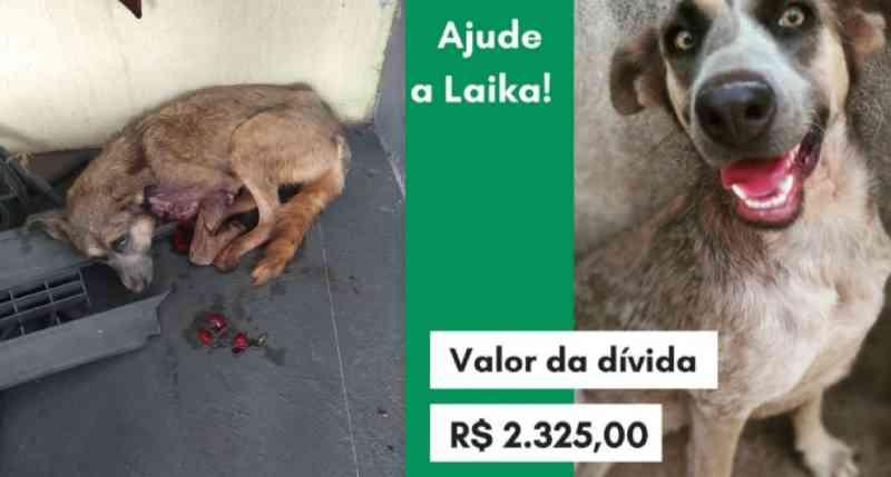 Cachorra que sobreviveu a ataque de tamanduá é adotada e rifa busca custear tratamento