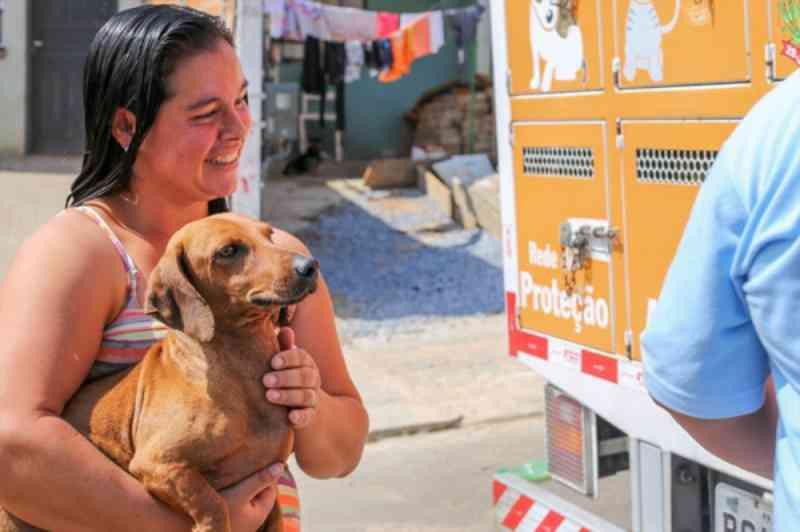 Agendamentos para castrações de cães e gatos em junho são abertos pela Rede de Proteção Animal da Prefeitura de Curitiba