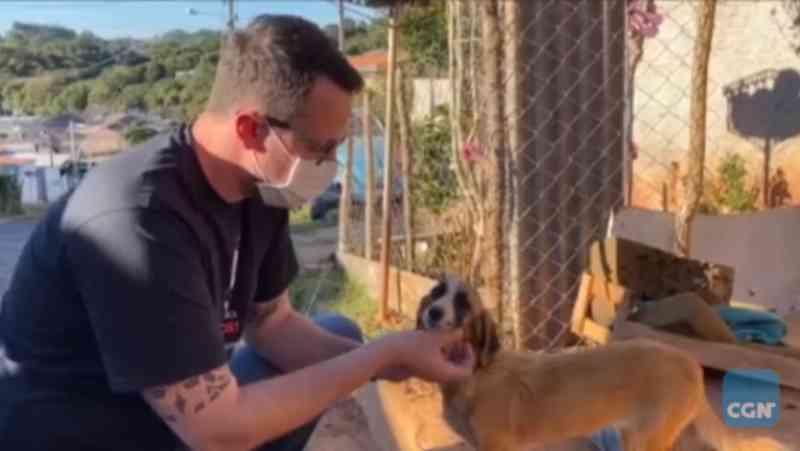 Cachorrinha que vivia com 'meio metro de corda' é resgatada pela Delegacia de Proteção ao Meio Ambiente, em Curitiba