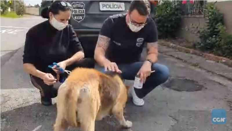 Cachorro de rua que era espancado por moradores é resgatado pela Delegacia de Proteção ao Meio Ambiente em Pinhais, PR