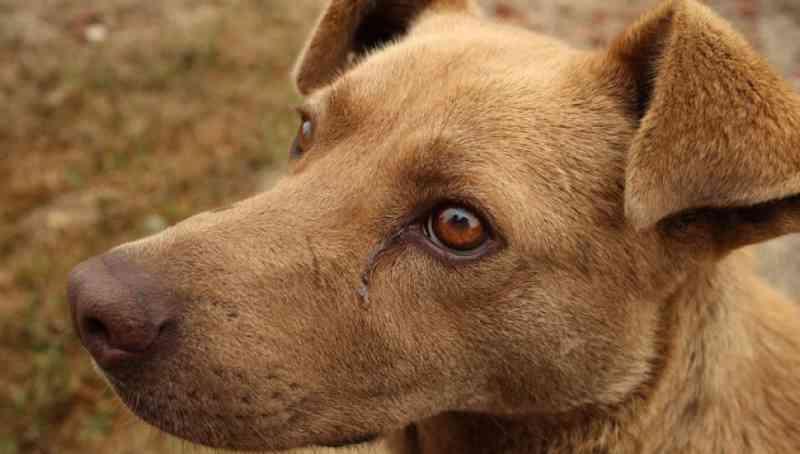 Quem atropelar animais e não prestar socorro poderá receber multa em Curitiba, PR