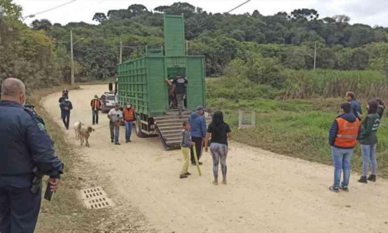 Rede de Proteção Animal apreende 16 animais abandonados e multa responsáveis por maus-tratos em Curitiba