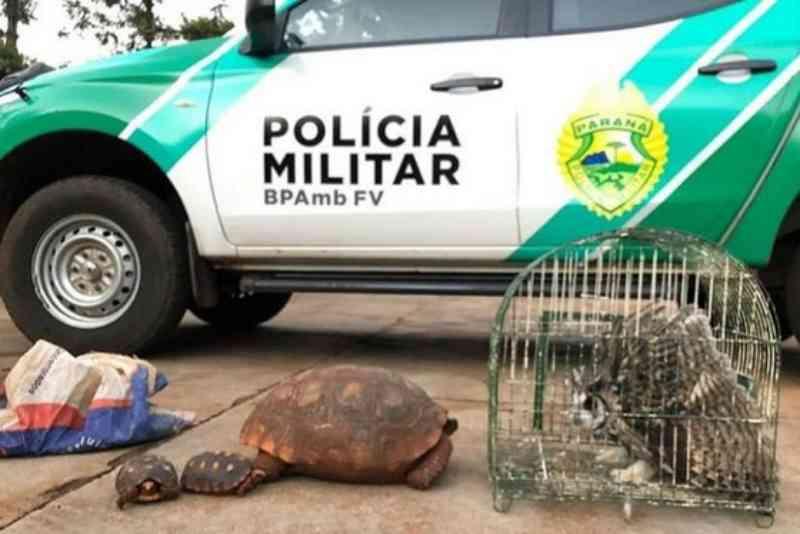 Polícia Ambiental resgata animais silvestres que estavam em cativeiro em Foz do Iguaçu, PR