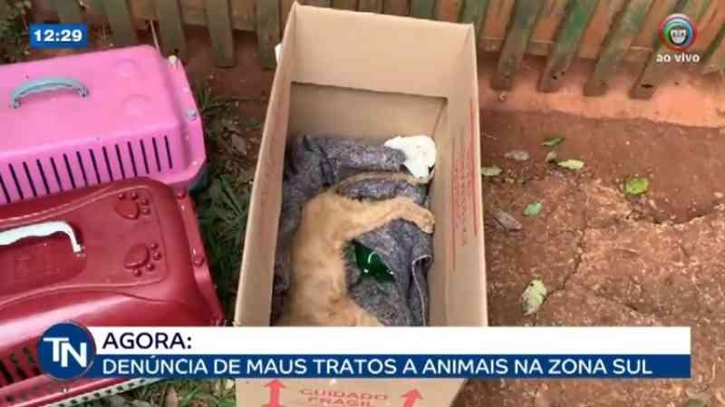 Polícia recolhe 15 animais após denúncia de maus-tratos em chácara na zona sul de Londrina, PR
