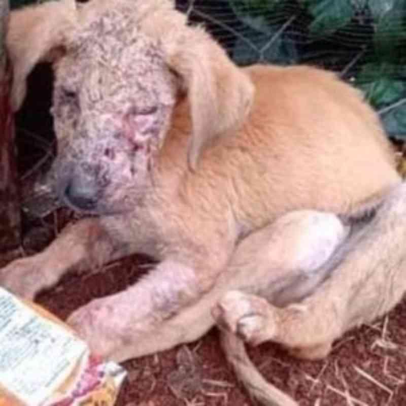 Revoltante: Cão é queimado com água fervente em Marialva, PR