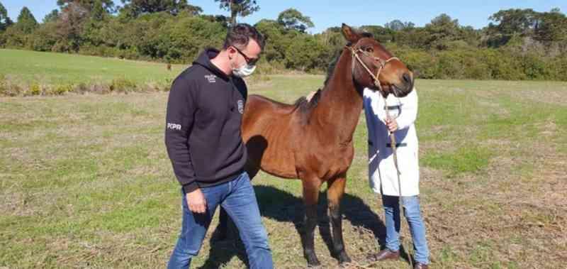 Polícia resgata dois cavalos após denúncia de maus-tratos em Palmeira, PR; VÍDEO