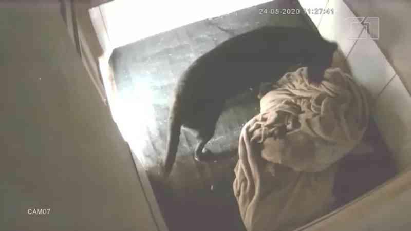 Câmera flagra cachorra cobrindo cadela doente com cobertor durante dia frio no Paraná; VÍDEO