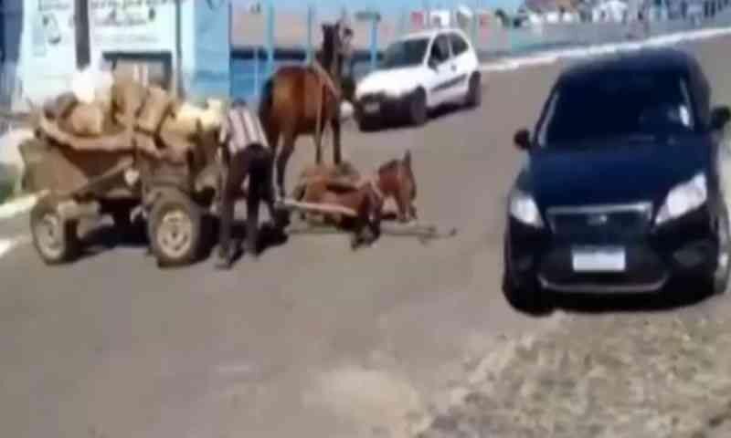 Cavalos que aparecem em vídeo puxando carroça pesada são resgatados pela Delegacia de Proteção ao Meio Ambiente
