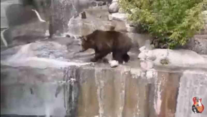 Homem pula em cercado de ursa e tenta afogar animal; veja vídeo