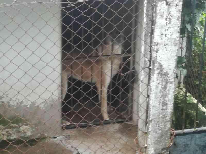 Animais mantidos em más condições num 'barraco' da Câmara de Resende, Portugal