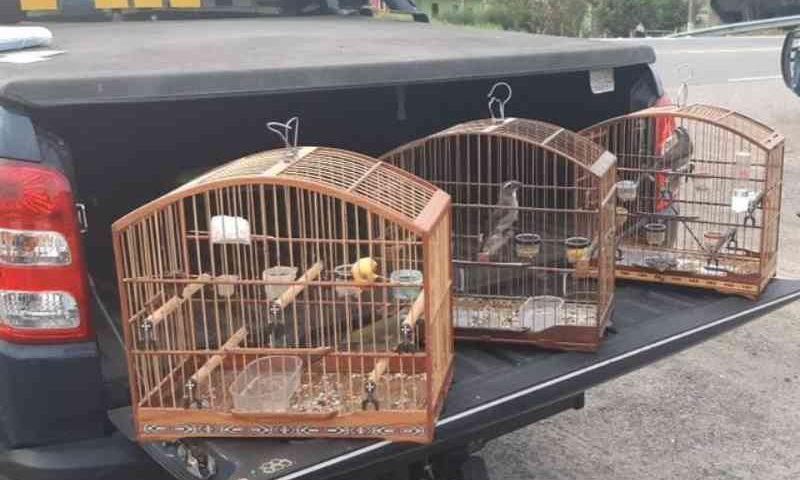 Jovem é autuada por transporte ilegal de animais silvestres na BR-393, em Vassouras, RJ