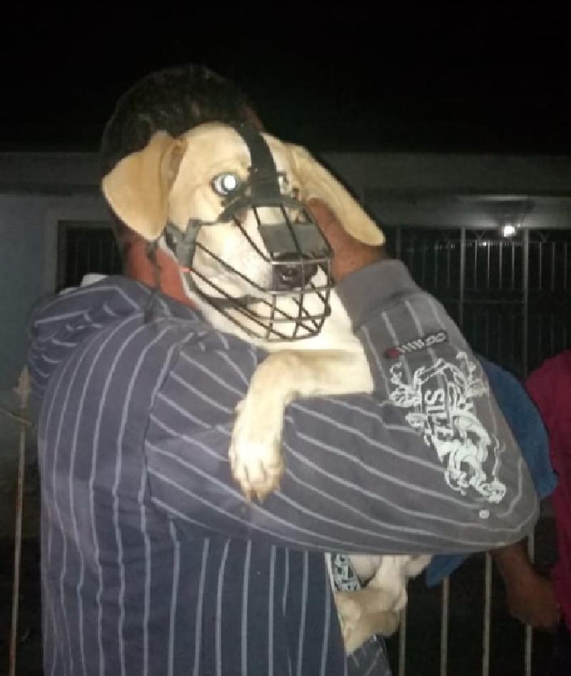 Tutor espanca cão para adestrá-lo e polícia resgata animal após denúncia em Rio Bonito, no RJ