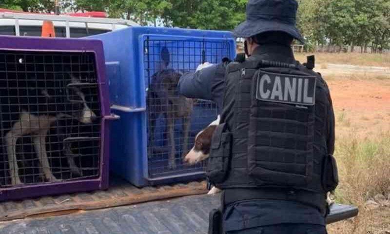 Cães com sinais de maus-tratos são resgatados de canil cladestino em Ministro Andreazza, RO