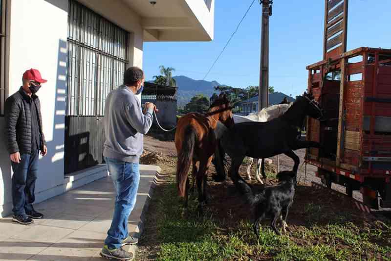 Quatro cavalos soltos são recolhidos em Candelária, RS