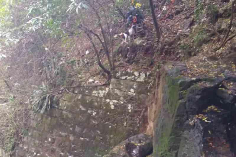 Ilhados no Arroio Tega, cachorros são resgatados pelos bombeiros em Caxias do Sul, RS