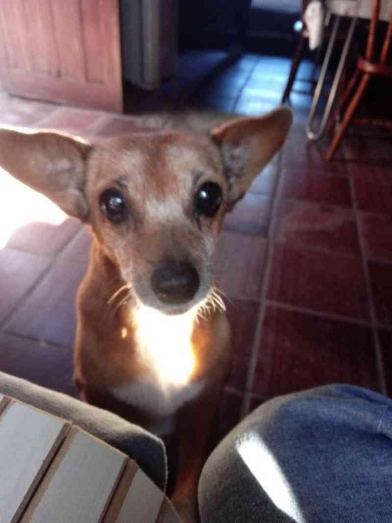 Família de Estância Velha (RS) busca por cadela deficiente que está desaparecida
