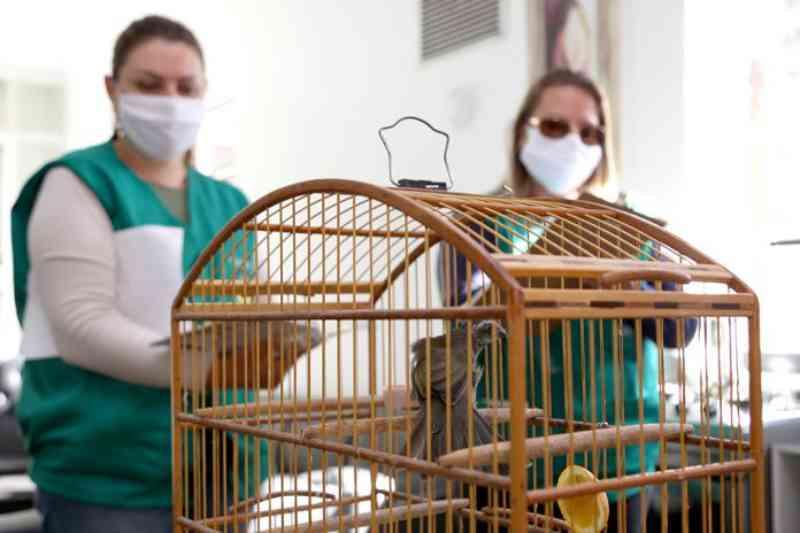 Mais de 40 aves silvestres são apreendidas em Esteio, RS