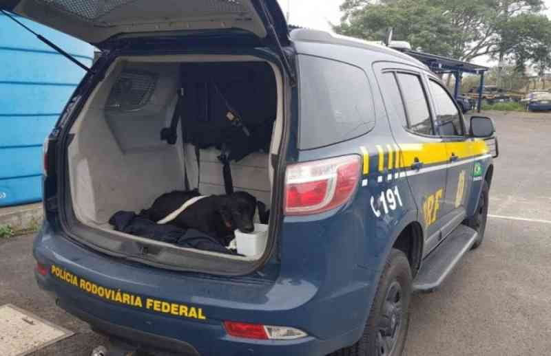 PRF resgata cachorro abandonado na rodovia BR 290, em Gravataí, RS