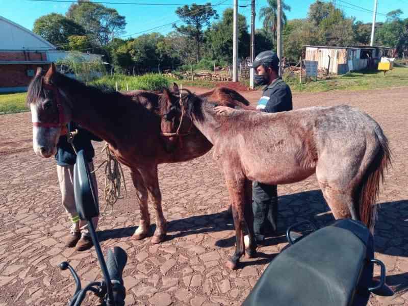 Cavalos sofrem maus-tratos e são resgatados em Ijuí, RS