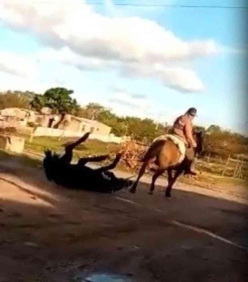 Brigada Militar identifica homem que arrastou cavalo em Rosário do Sul, RS