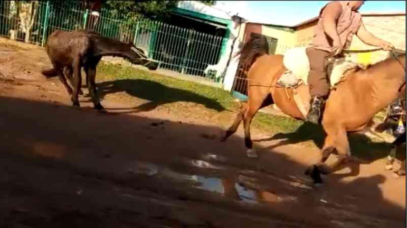 Polícia identifica autor de maus-tratos a cavalo no Sul