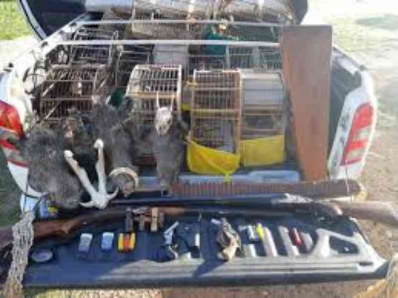 Patram apreende pássaros em cativeiro, armas de fogo e materiais de caça em Sertão Santana, RS