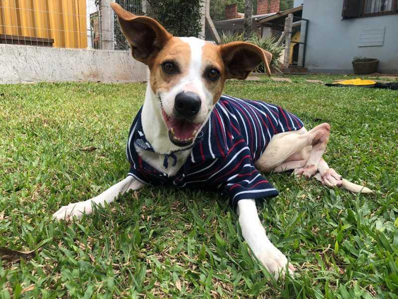 Cachorro com deficiência é adotado após quatro anos de espera em Dois Irmãos, RS
