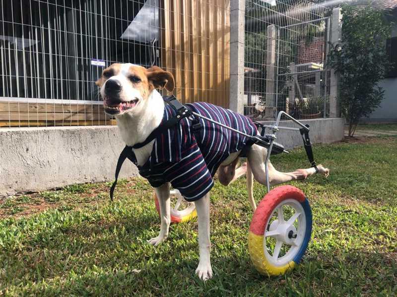 Becker em sua cadeira adaptada para passeios — Foto: Arquivo pessoal