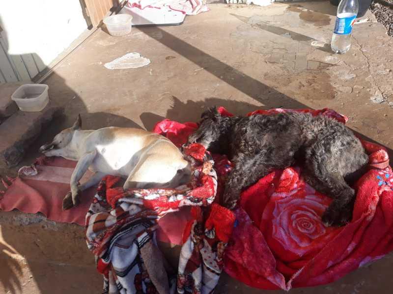 Moradores registram mais duas mortes de animais envenenados no bairro Cidade Nova, em Ivoti, RS