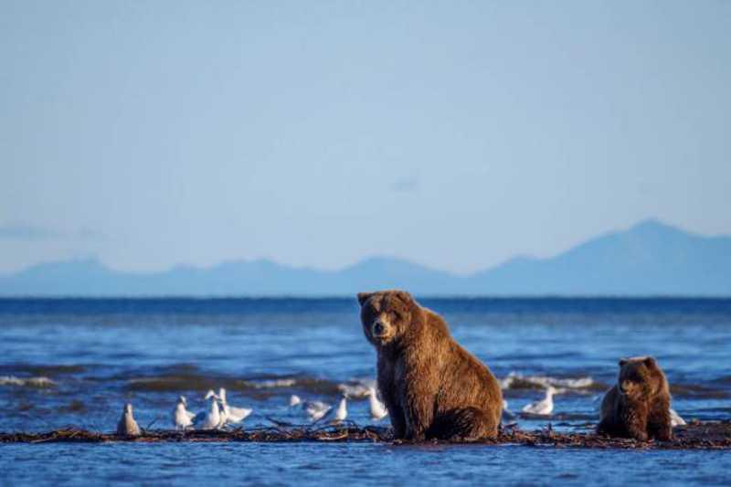 Urso: nova legislação sobre caça deve ser publicada ainda nessa semana (Education Images/Universal Images Group/Getty Images)