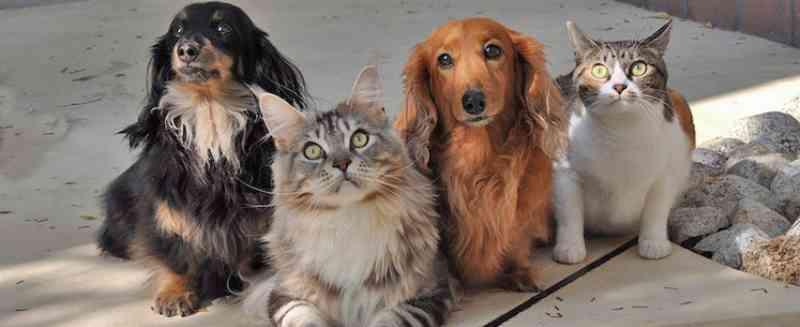 Con Animal segue resgatando animais em Concórdia (SC) durante a pandemia, mas necessita de doações