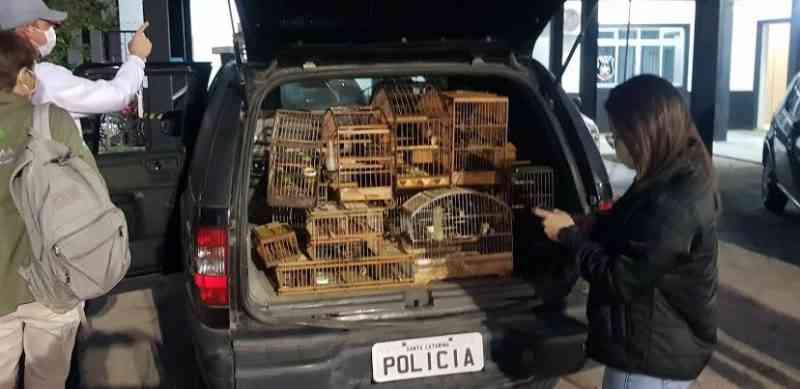 Dupla é presa por manter pássaros presos em garrafas plásticas em Palhoça, SC