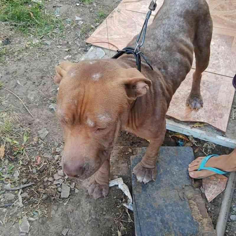 Polícia Militar de Porto União (SC) resgata cão vítima de maus-tratos