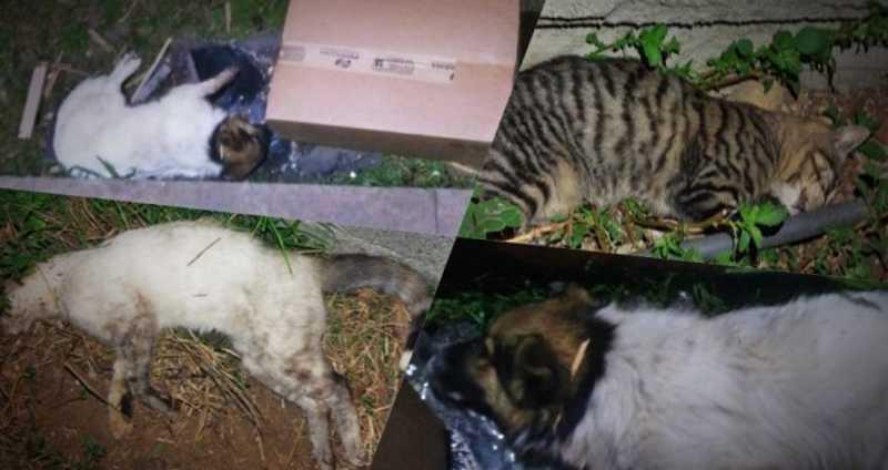 Envenenamento causa a morte de animais de estimação em São Joaquim, SC