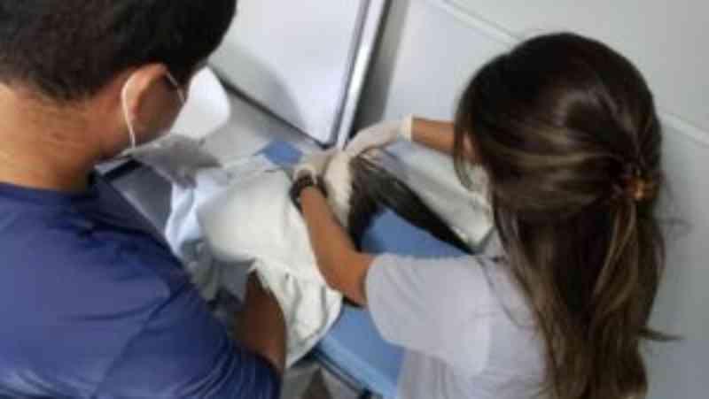 Animais marinhos resgatados recebem atendimentos da FMA, em Sergipe