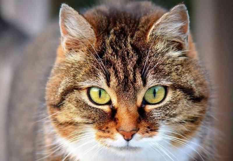 Santuário dos Gatos recebe doação de 150 doses da vacina V4