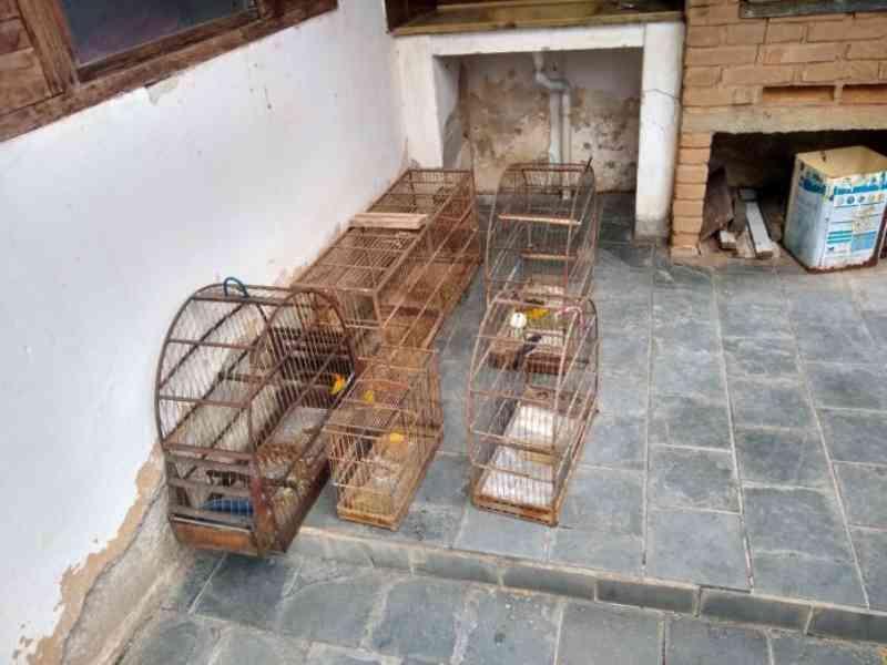 Polícia Ambiental apreende 11 aves silvestres em cativeiro no Poiares, em Caraguatatuba, SP