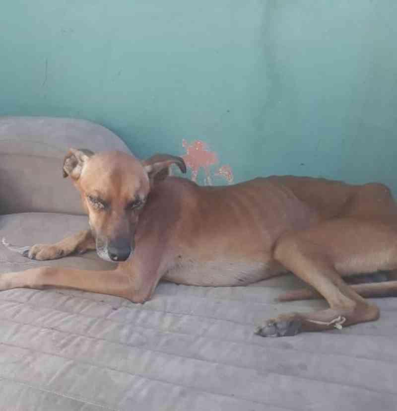 Homem é multado em R$ 6 mil por manter cães debilitados e desnutridos em Caraguatatuba, SP