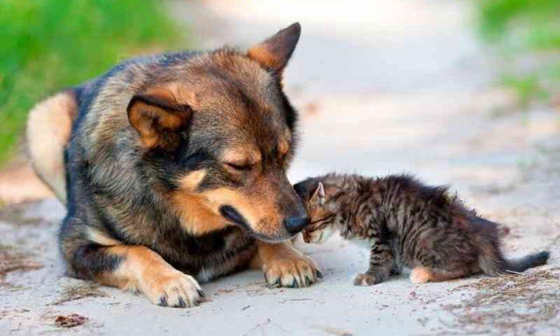 Indaiatuba (SP) aprova lei que cria Banco de Ração para ONGs, protetores e famílias carentes cuidarem de seus animais