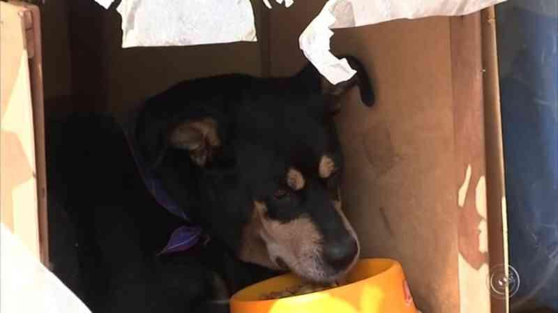 Abrigo de animais de Jundiaí (SP) registra queda no número de adoções durante a pandemia