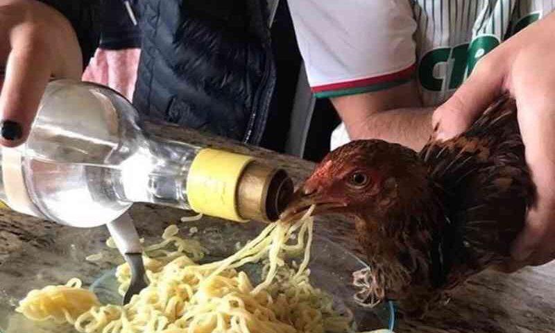 OAB denuncia jovens que deram bebida alcoólica a galinha durante festa em Marília, SP