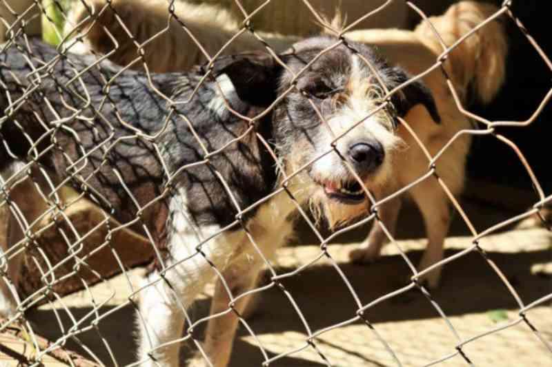 Abrigo Municipal de Animais conta com cães e gatos castrados para adoção em Pindamonhangaba, SP