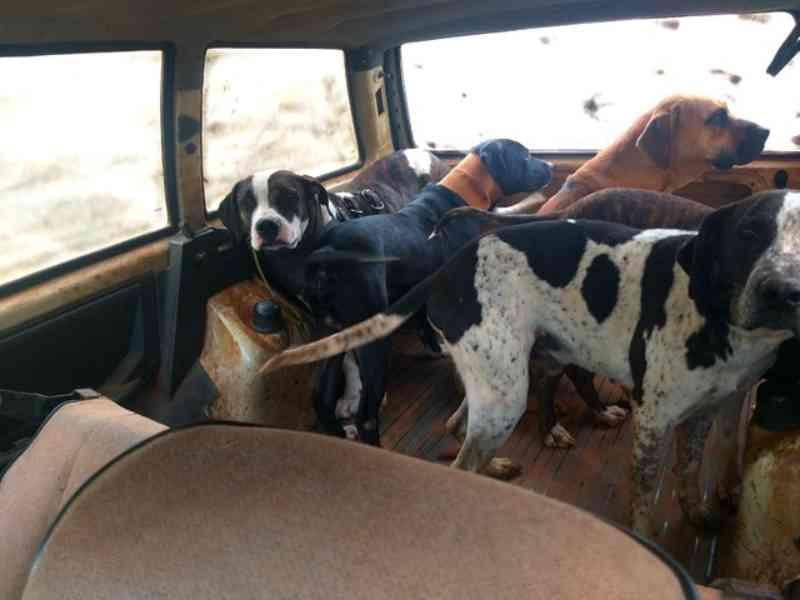 Polícia Ambiental aplica multa de R$ 42 mil após constatar maus-tratos a animais usados para caça em Rancharia, SP