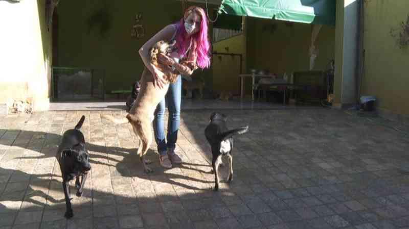 ONG faz evento online para adoção de cães e gatos durante a quarentena em Ribeirão Preto, SP