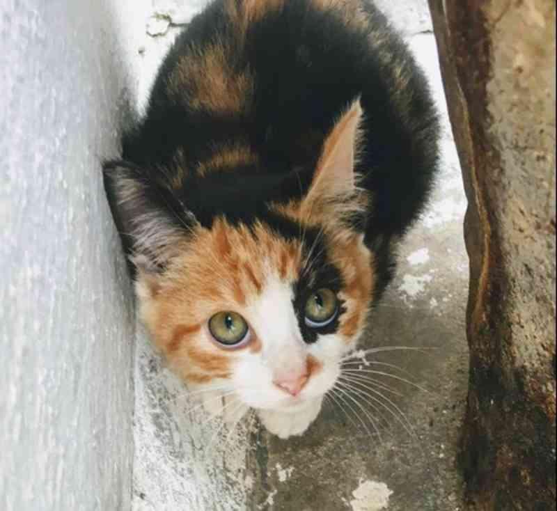 Cães e gatos do CCZ aguardam visita de interessados na adoção emSão José dos Campos, SP