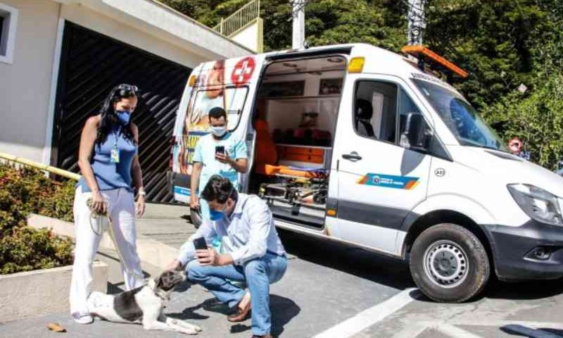 Ambulância veterinária atenderá animais vítimas de maus-tratos em Santana de Parnaíba, SP