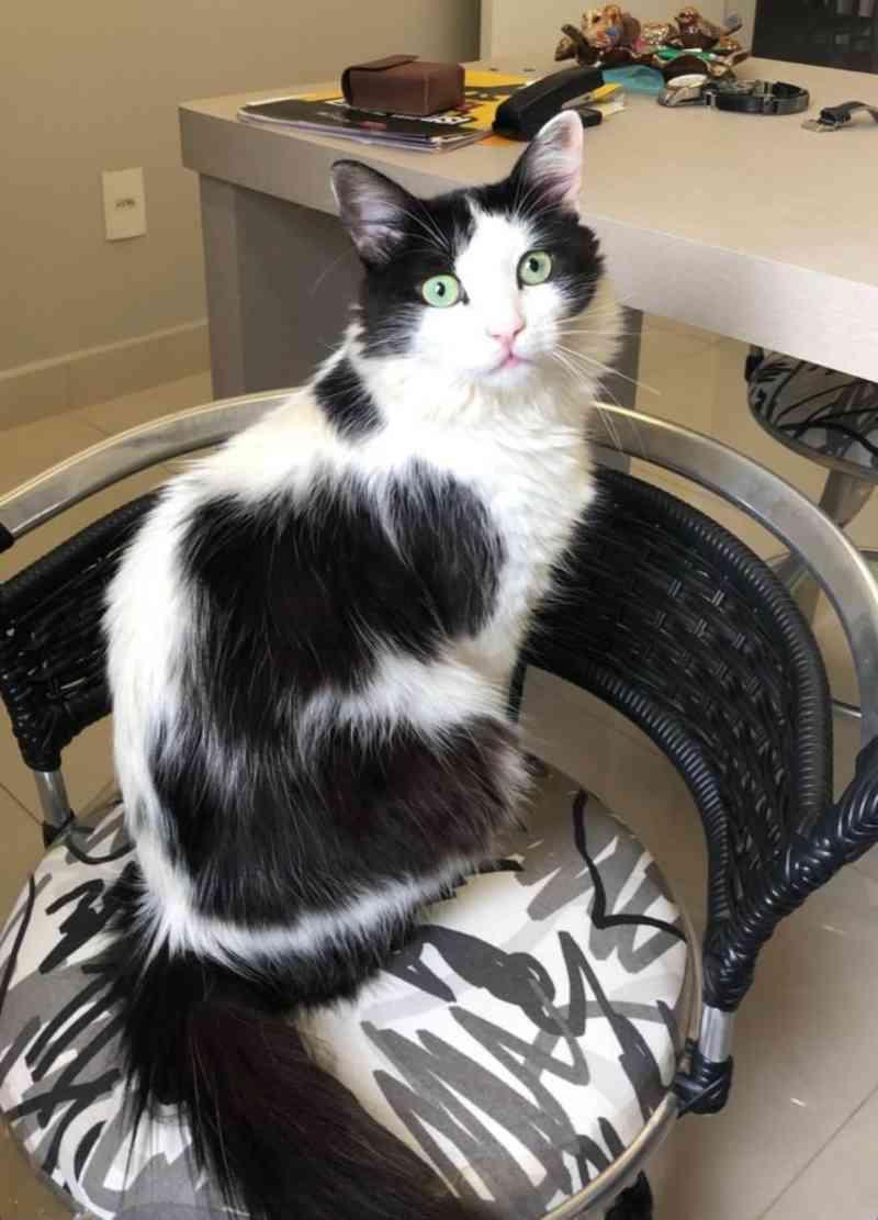 Bióloga denuncia morte de gato de estimação e faz campanha contra maus-tratos em condomínio de luxo