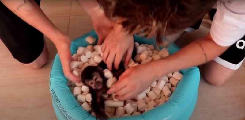 Irmãos causam polêmica com vídeo em que colocam macaco em piscina de marshmallow